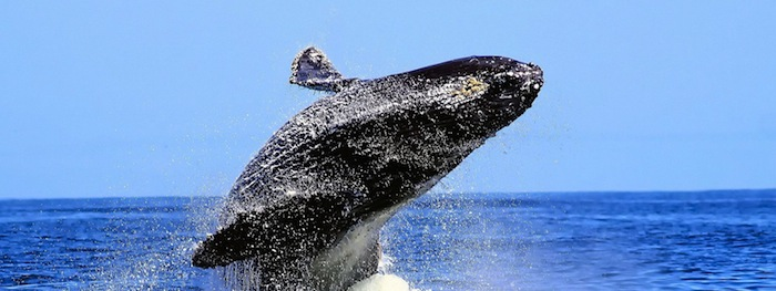 whale watching in ballito