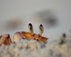 You've always wanted to know….Why do crabs walk sideways?