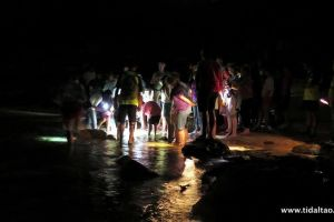 Rocky Shore Walks & Night Walks