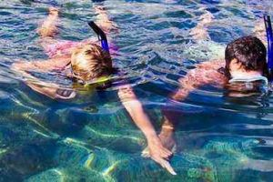 FAQ & Essential Info